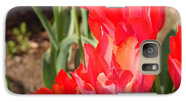 Galaxy S7 Case featuring the photograph Praying Tulips by Rod Ismay