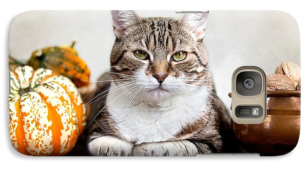 Cat And Pumpkins Galaxy S7 Case by Nailia Schwarz