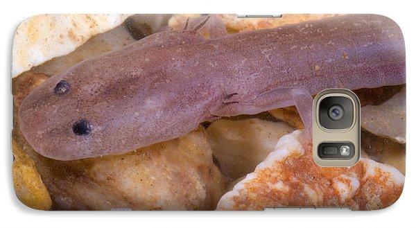 Ozark Blind Cave Salamander Galaxy S7 Case by Dante Fenolio