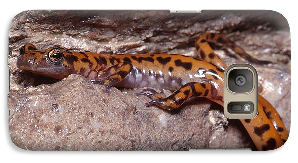 Cave Salamander Galaxy S7 Case