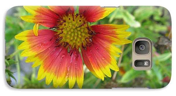 Galaxy Case featuring the photograph A Beautiful Blanket Flower by Ashish Agarwal