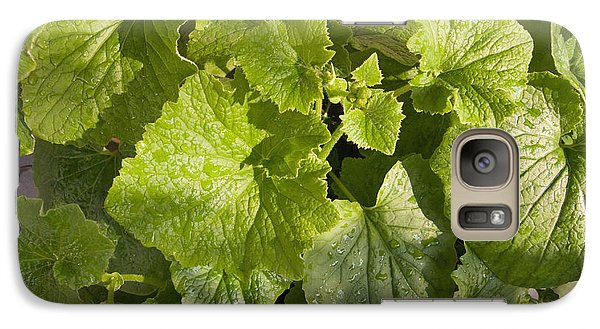 Galaxy Case featuring the photograph A Green Leafy Vegetable Plant After Watering In Bright Sunrise by Ashish Agarwal