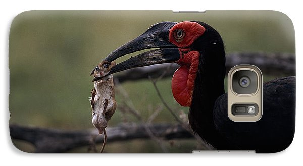 A Southern Ground Hornbill Prepares Galaxy S7 Case