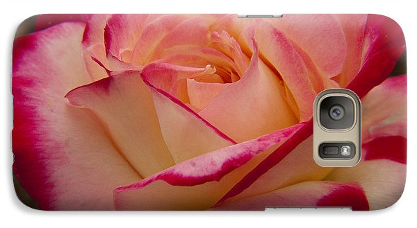 Galaxy Case featuring the photograph American Beauty Rose by Darleen Stry