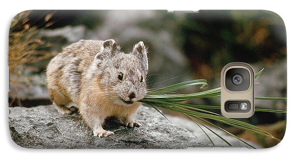 Galaxy Case featuring the photograph American Pika by Doug Herr