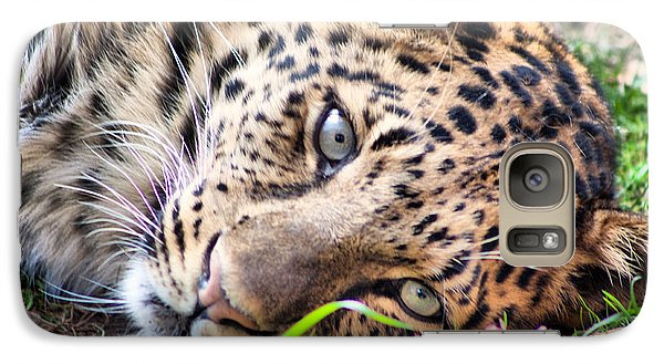 Galaxy Case featuring the photograph Amur Leopard by Lynne Jenkins