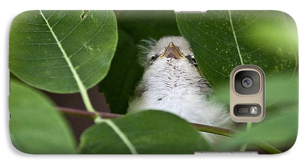 Galaxy Case featuring the photograph Baby Bird Peeping In The Bushes by Jeannette Hunt