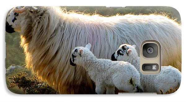 Galaxy Case featuring the photograph Baby-lambs by Barbara Walsh