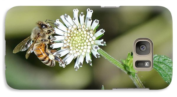 Galaxy Case featuring the photograph Bee On White Clover by Jodi Terracina