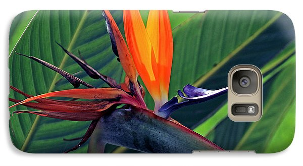 Galaxy Case featuring the photograph Bird Of Paradise by Larry Nieland