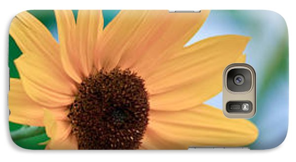 Galaxy Case featuring the photograph Black-eyed Susan by Ann Murphy