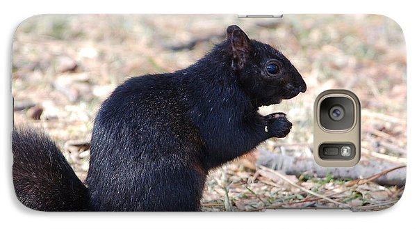Galaxy Case featuring the photograph Black Squirrel Of Central Park by Sarah McKoy