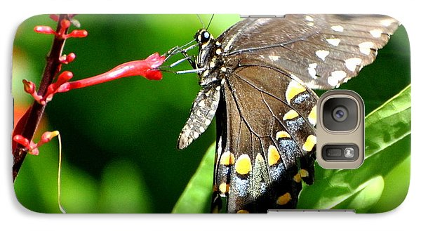 Galaxy Case featuring the photograph Black Swallow Tail Butterfly by Jodi Terracina