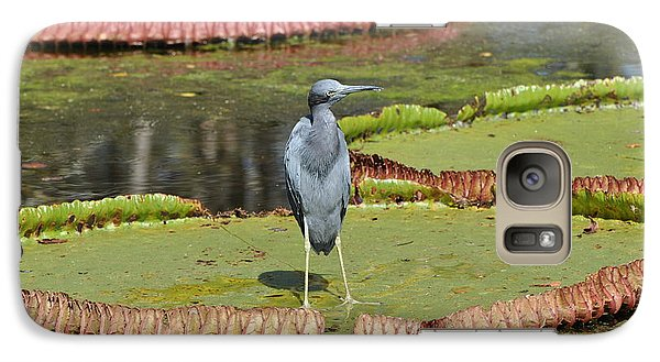 Galaxy Case featuring the photograph Blue Heron On Giant Lilly Pad by Jodi Terracina