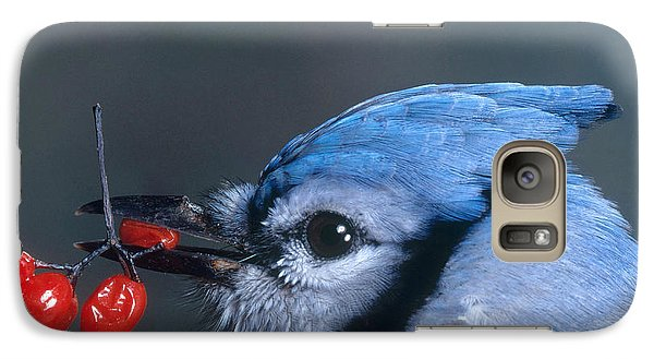 Blue Jay Galaxy S7 Case by Photo Researchers, Inc.