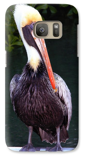 Galaxy Case featuring the photograph Brown Pelican Islamorada by Maureen E Ritter