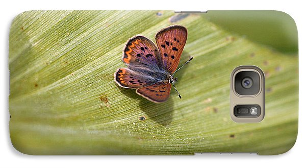 Galaxy Case featuring the photograph Butterfly On Cornflower Leaf by Mitch Shindelbower