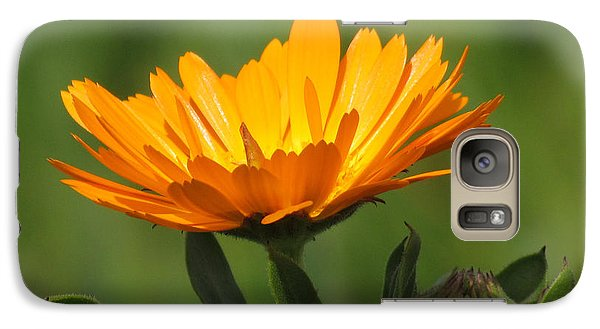 Galaxy Case featuring the photograph Calendula Bloom by Bonnie Muir