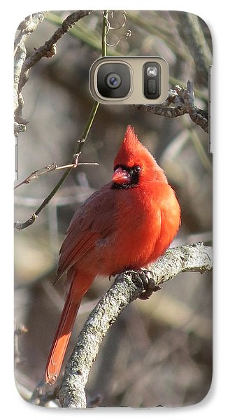 Galaxy Case featuring the photograph Cardinal Redbird by Rebecca Overton