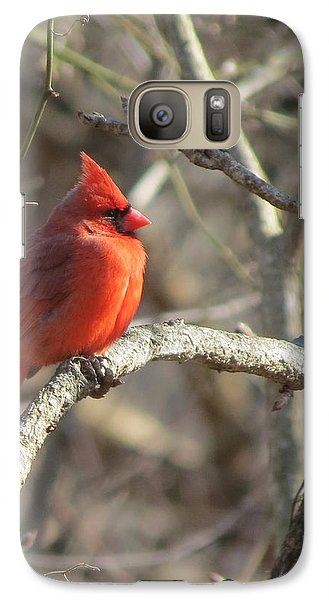 Galaxy Case featuring the photograph Cardinal Redbird Sunlit by Rebecca Overton