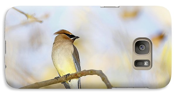 Cedar Waxwing On Yellow And Blue Galaxy Case by Susan Gary