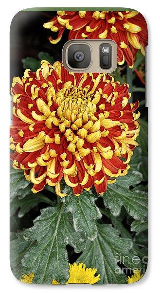 Galaxy Case featuring the photograph Chrysanthemum by Eva Kaufman