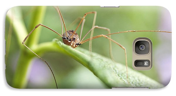 Galaxy Case featuring the photograph Creepy Crawly Spider by Jeannette Hunt