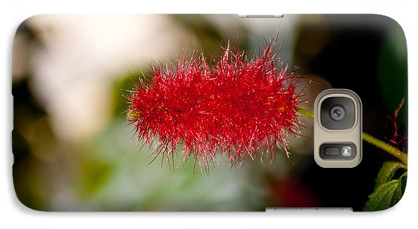 Galaxy Case featuring the photograph Crimson Bottle Brush by Tikvah's Hope