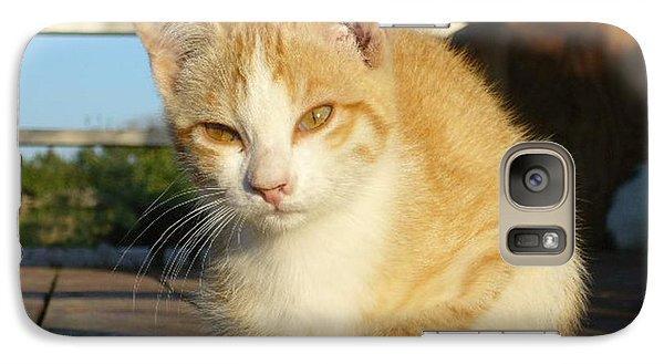 Galaxy Case featuring the photograph Curious Kitten by Jim Sauchyn