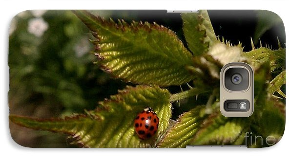 Galaxy Case featuring the photograph Cute Red Ladybug  by Garnett  Jaeger