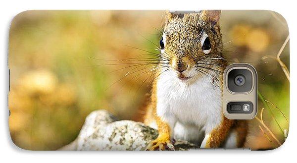 Cute Red Squirrel Closeup Galaxy S7 Case by Elena Elisseeva