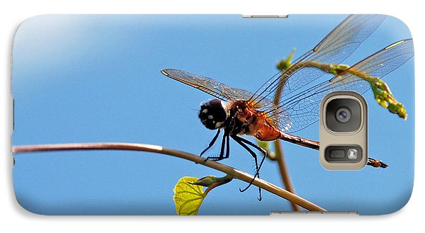 Galaxy Case featuring the photograph Dragonfly On A Vine by Kay Lovingood