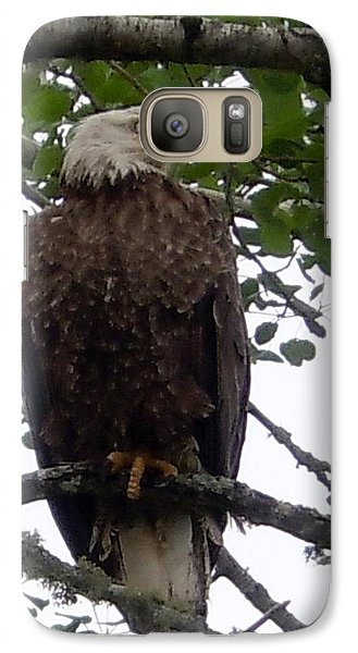 Galaxy Case featuring the photograph Eagle At Hog Bay Maine by Francine Frank