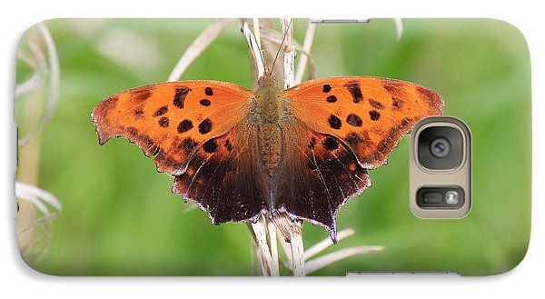 Galaxy Case featuring the photograph Eastern Comma Butterfly by Penny Meyers