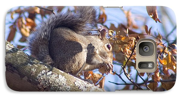 Galaxy Case featuring the photograph Eating Squirrel by Michael Waters