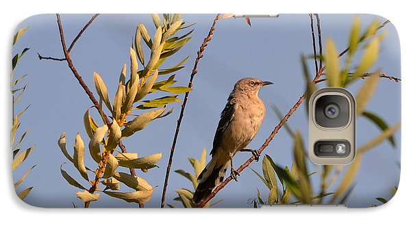Galaxy Case featuring the photograph Mocking Bird1 by Rima Biswas
