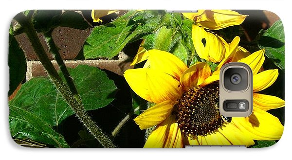 Galaxy Case featuring the photograph Everyone Loves Sunflowers by Jim Sauchyn