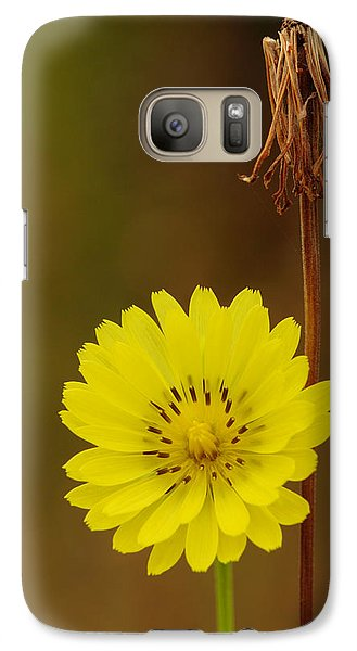 Galaxy Case featuring the photograph False Dandelion Flower With Wilted Fruit by Daniel Reed