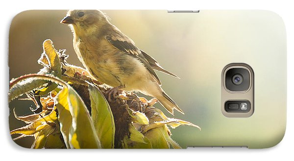 Galaxy Case featuring the photograph Finch Aglow by Cheryl Baxter