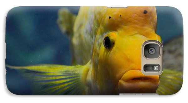 Galaxy Case featuring the photograph Fish by Milena Boeva