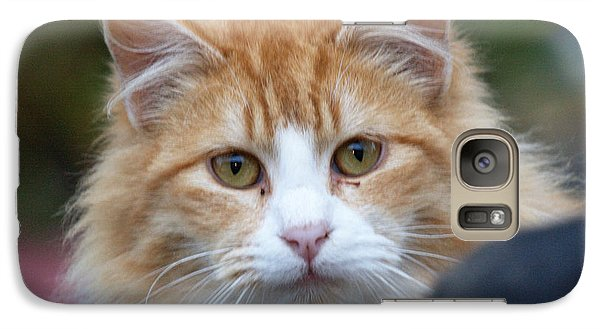 Galaxy Case featuring the photograph Fluffy Orange by Chriss Pagani