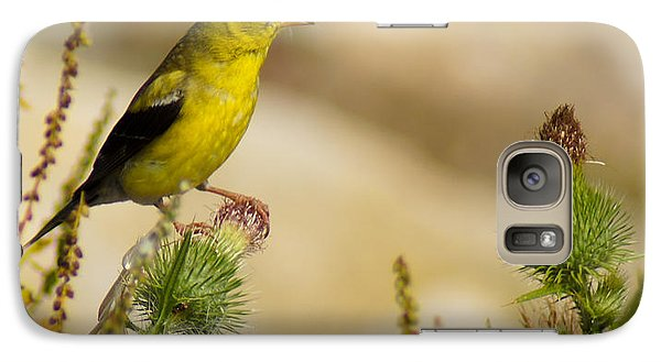 Goldfinch On Lookout Galaxy S7 Case