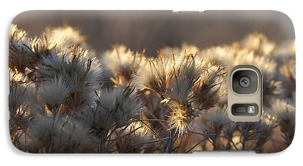 Galaxy Case featuring the photograph Gone To Seed by Fran Riley