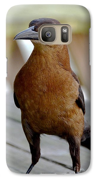 Galaxy Case featuring the photograph Grackle by Pravine Chester