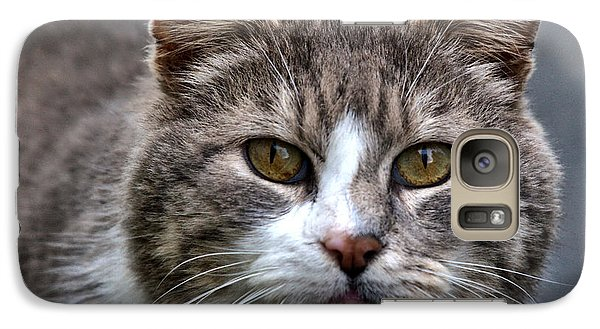 Galaxy Case featuring the photograph Gray Tabby Tux Cat by Chriss Pagani