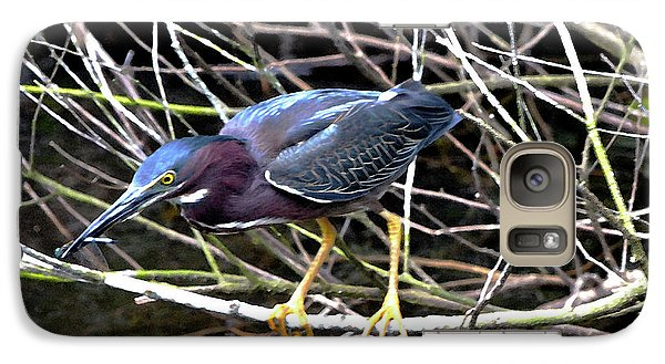 Galaxy Case featuring the photograph Green Heron by Pravine Chester
