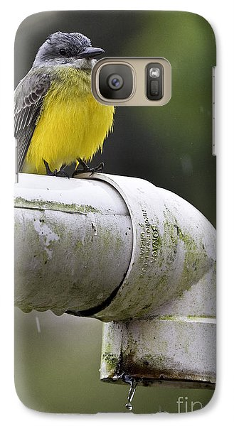 Grey-capped Flycatcher Galaxy Case by Heiko Koehrer-Wagner