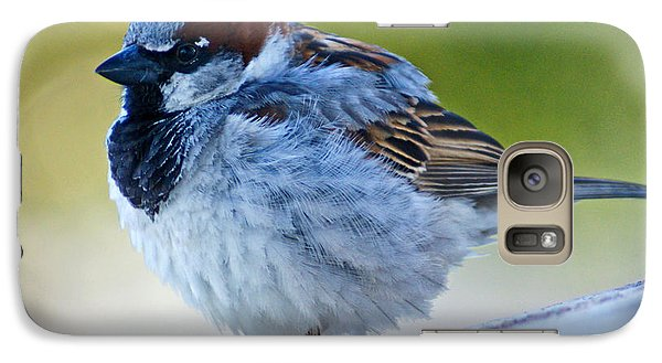 Galaxy Case featuring the photograph Guard Bird by Colleen Coccia