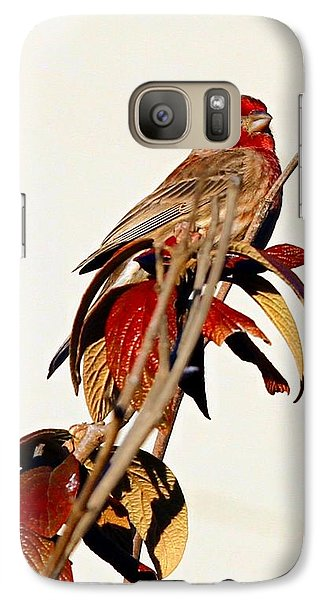 Galaxy Case featuring the photograph House Finch Perch by Elizabeth Winter