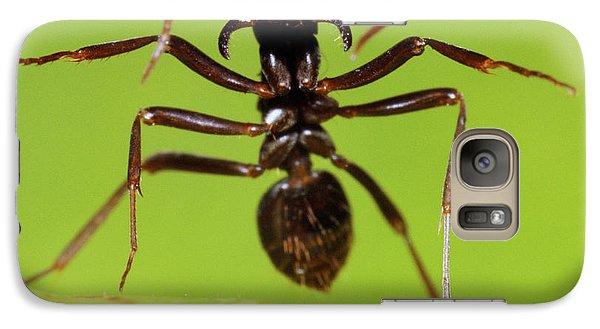 Japanese Slave-making Ant Polyergus Galaxy Case by Satoshi Kuribayashi